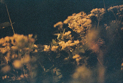 amazing, awesome, beautiful, film, floral, flower, flowers, grain, hipster, indie, nature, night, photography, vintage