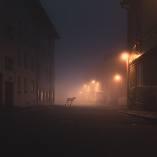 night animals, road, street, mystery, mysterious, streetlights, horse, photography, photo, dream, night