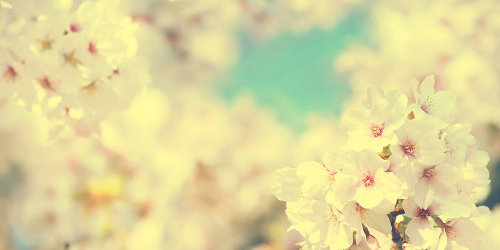 Twitter Headers Vintage Flowers images