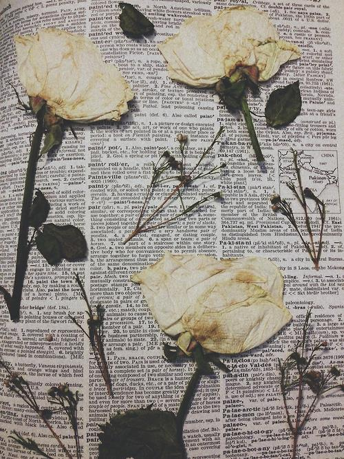 beautiful, book, flower, nature, newspaper, paper, photography, plant, roses, vintage, white rose