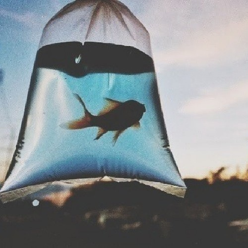 photography, animals, paysage, life, Dream, colors, forest, fish, beautiful, cute, love, new, ocean, dark, water, little, blue