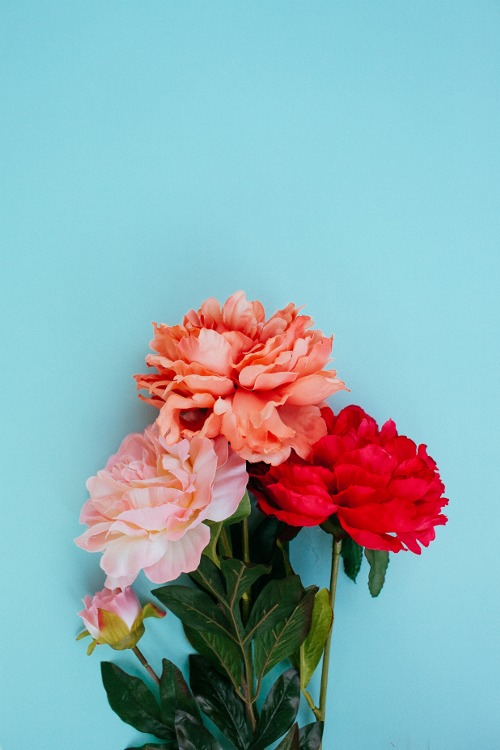 Roses Via Tumblr Image 2019349 By Lady D On Favim Com