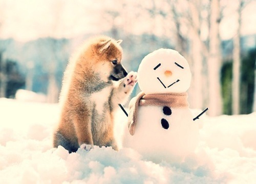 adorable, animal, cute, dog, frozen, funny, puppy, snow, snowman, tumblr, winter