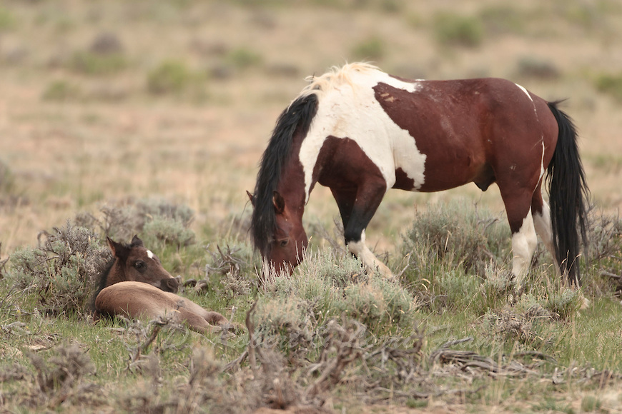 animal, animals, awesome, beautiful, cool, cute, earth, field, girly, horse, horses, love, lovely, mustang, riding, wildlife, ❤️, wild horse, horse life